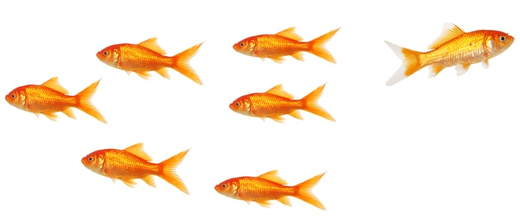 Online marketing strategy: higher standard