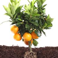 Marketing efforts bear fruit